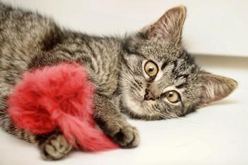 funny striped cross-eyed kitten
