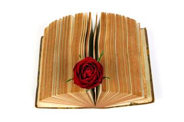 Buch mit Rose