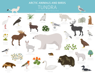 Tundra biome. Terrestrial ecosystem world map. Arctic animals and birds infographic design
