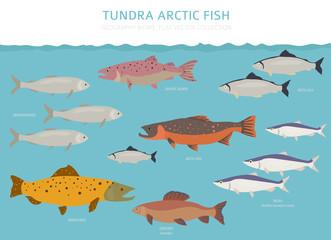 Tundra biome. Terrestrial ecosystem world map. Arctic fish infographic design