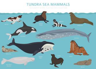 Tundra biome. Terrestrial ecosystem world map. Arctic sea mammals infographic design