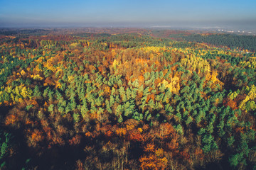 Sunny autumn forest in aerial view.