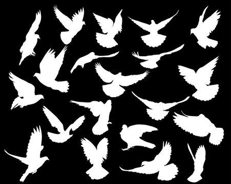 twenty isolated white doves