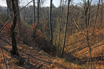 Panoramic view of a forest path on an winter afternoon.
