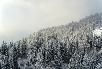 Snow covered winter trees in the foreground frame a perfect winter scene as a snowy alpine mountain tops peak through the clouds and mist in the background.