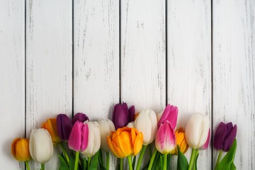 Beautiful tulips background