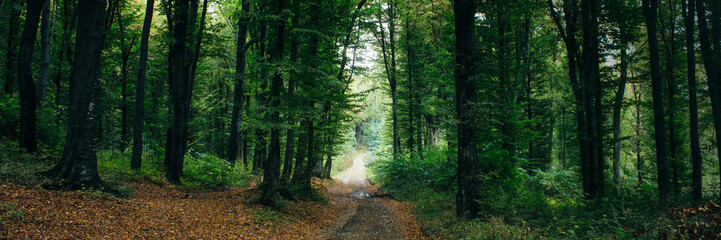 road through green forest panorama landscape