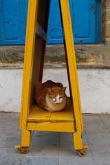 Katze sitzt auf gelbem Holz in der Medina von Essaouira in Marokko.