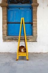 Katze liegt in gelbem Schild in der Medina von Essaouira, Marokko.