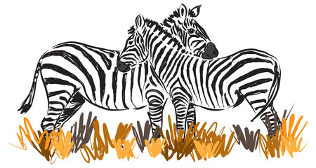 two zebras together illustration