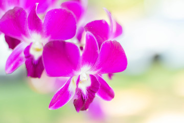 Fresh crisp Purple Orchids Blooms with Micro greens. Fresh salad ingredients.