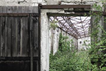 Eingestürzter Viehstall mit Pflanzenbewuchs
