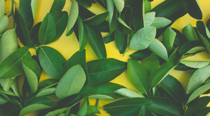 Top view of lemon,orange leaves pattern background.concepts ideas of fruit,vegetable.nature flat lay