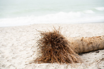 Palm tree trunk on beach