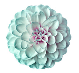 Poster de jardin Dahlia white-turquoise flower dahlia on a white background isolated with clipping path. Closeup. for design. Dahlia.