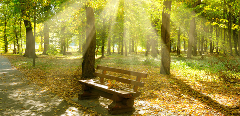 Autumn park with paths and bench. The sun rays illuminate Yellow leaves of trees. Wide photo