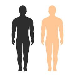 Male body vector silhouette