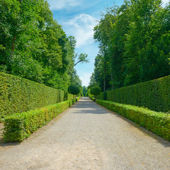 High hedges in the park in Germany.