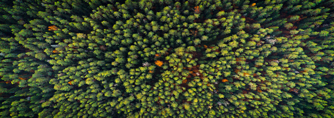 Aerial top view of autumn trees in wild park in september Fotomurales