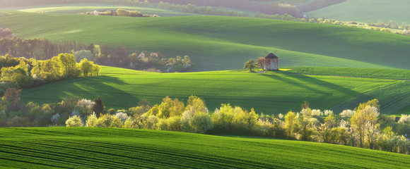 Aluminium Prints Lime green Old windmill on a hill in the rays of the sun at sunset, green fields, blooming trees. Spring rural landscape with an old mill and blooming trees. South Moravia. Czech Republic.