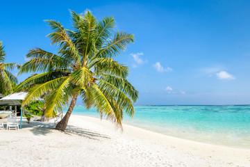 Urlaub am Meer mit Palme und Strand