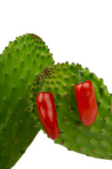 red peppers on cactus
