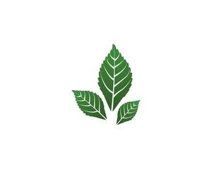 green leaf ecology logo