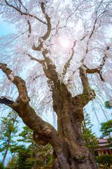 Sainokawara Park iat Kusatsu onsen hot spring town in Gunma, japan