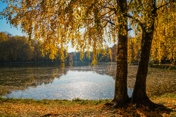 The golden foliage of birches whirls in the blue water of the pond. Through the foliage of trees penetrate the rays of the bright sun