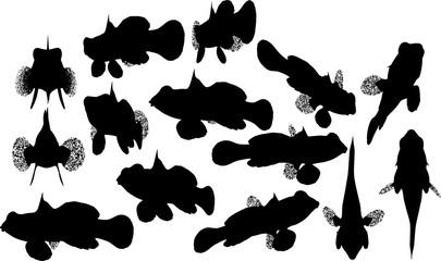 熱帯魚のシルエット
