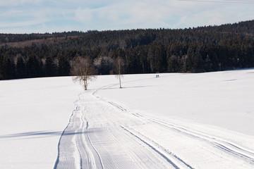 Ski track, Ski Cross-Country Skiing, Winter Landscape