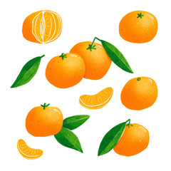 Tangerines isolated illustrations set