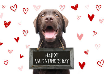 Romantic dog with text happy valentines day on wooden board with cute hand drawn hearts on white background for 14 february