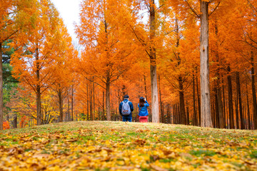 Wall Mural - Korean couple walking in nami park in nami island