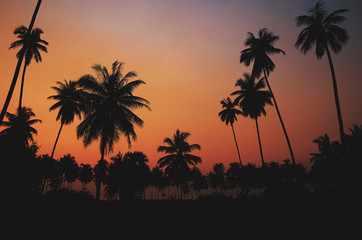 Beautiful tropical coconut palm tree