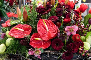 Rote Blumen, Anthurien, Flamingoblumen