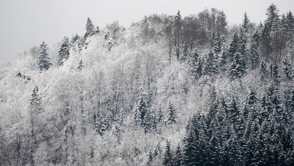 winter forest cold mood background picture