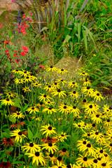 Colourful late summer flower garden border in a walled garden