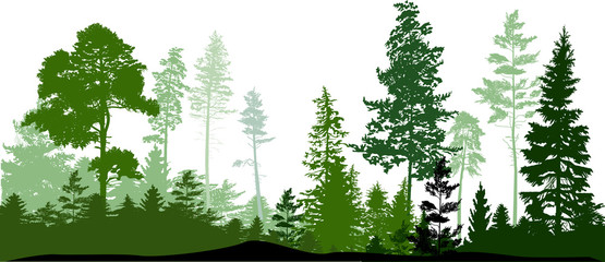 green color pines and fir forest on white