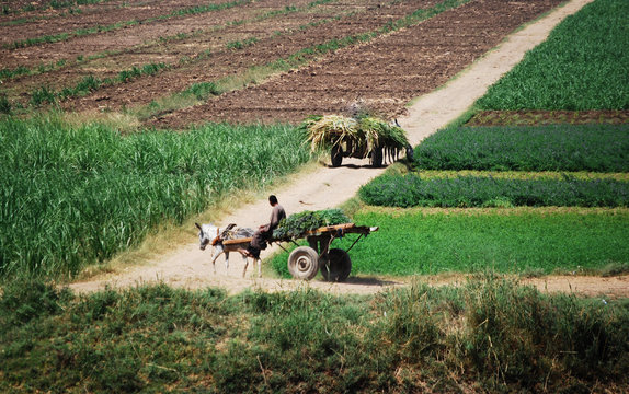 Cruising on the Nile River and the countryside, southern Egypt