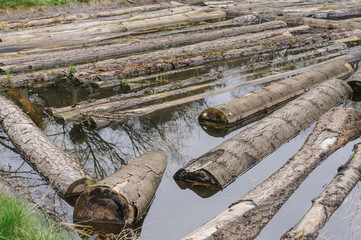 Raw logs floating down the river
