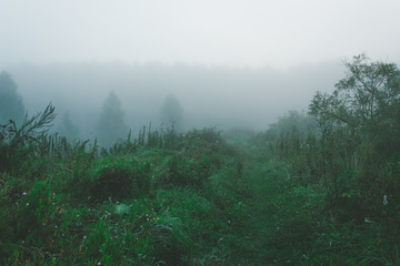 Fog in the forest, foggy morning in forest. Mystical atmosphere.