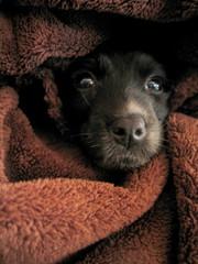 Black dog puppy. Beautiful Pet