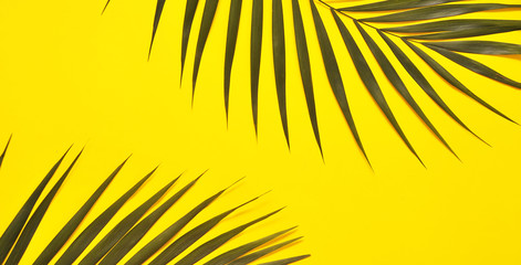 Palm tree leaf on yellow background.