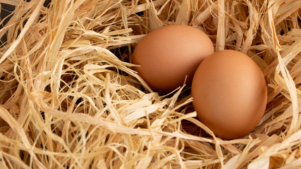 eggs in the nest on a grey background copy space, top view