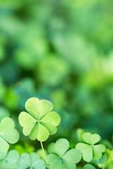 Lucky Irish Four Leaf Clover for St. Patricks Day Background Design Element