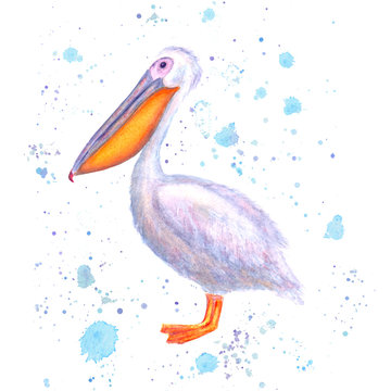 Pelican watercolor. Hand drawn white bird with watercolour blue splashes isolated on white background.