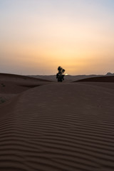 Dubai desert trip, sand and dunes, United arabic Emirates