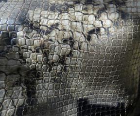 Pelle di serpente