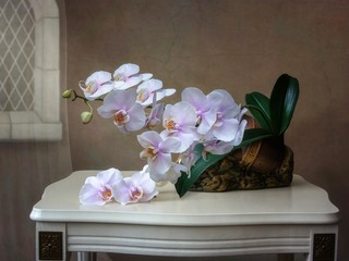 Still life with orchid flowers